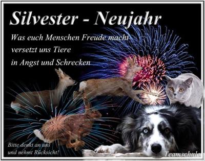 silvester_teamschule_hund_katze_angst