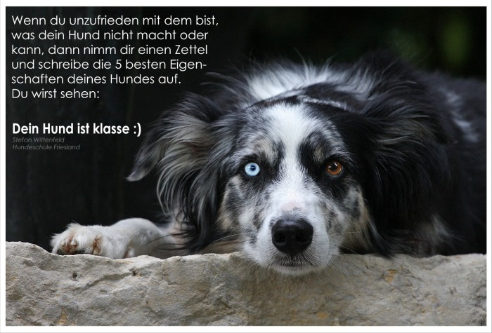 zitat-tollerhund