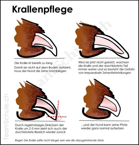 pfoten_kralle_teamschule